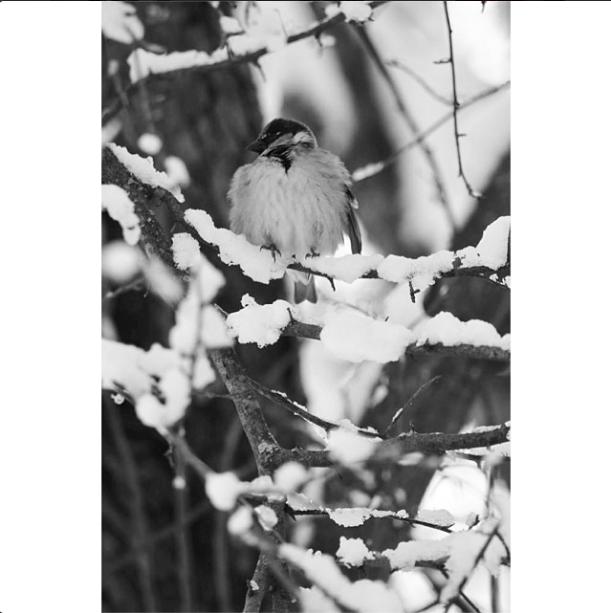 Senior Mackenzie Dean captures a bird in this snowy scene.