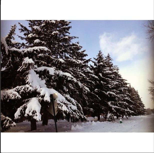 """@monfizzy: """"Minus the below zero degree temperature and the awful wind and the snow that's as high as my knee, it still looks beautiful outside."""""""