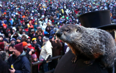 Punxsutawney Phil pleased everyone when he predicted an early spring on last year's Groundhog Day.