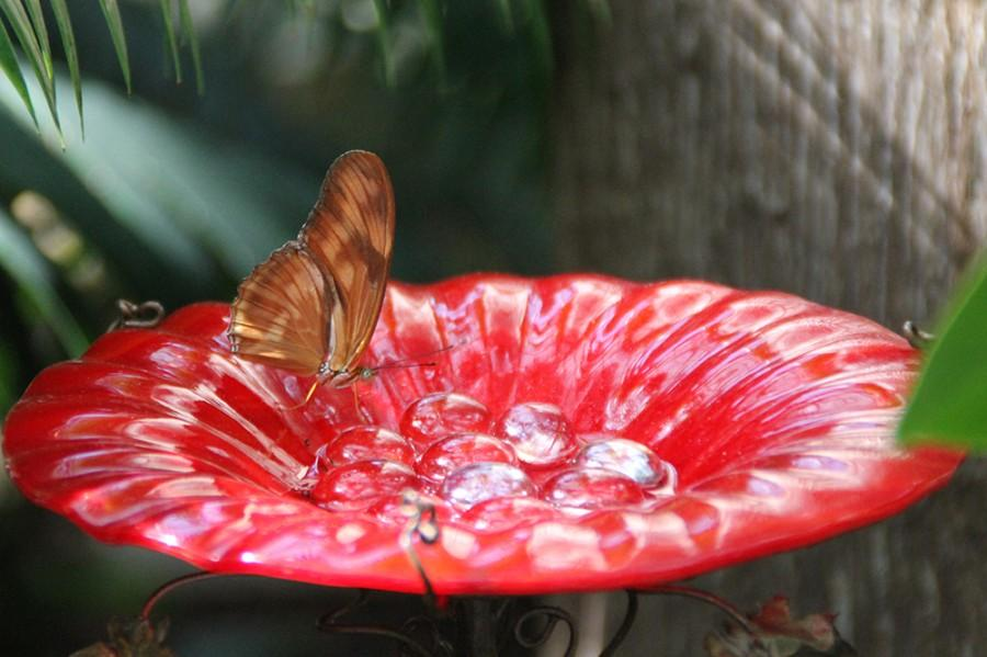 The+butterfly+exhibit+at+the+Indianapolis+zoo+offers+colorful+displays.+Admission+is+included+with+a+zoo+ticket.